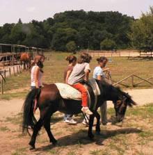 Quando Il Cavallo E L 39 Asino Diventano Insegnanti