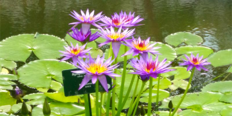 Biodiversità, motore della vita. L'Orto botanico di Padova