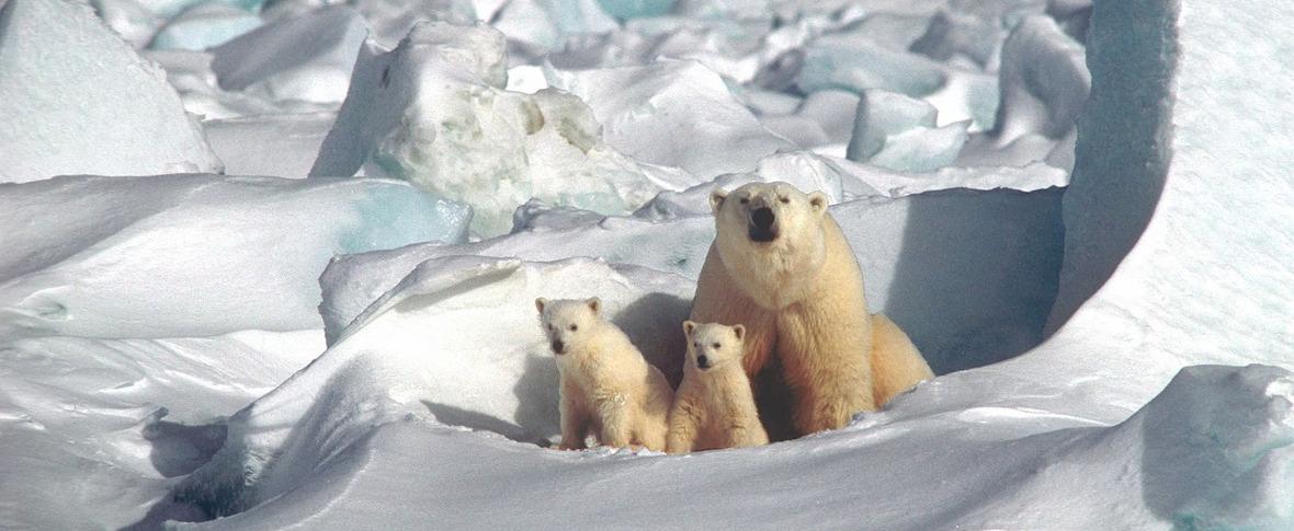 Studiare gli ecosistemi dell'Artico