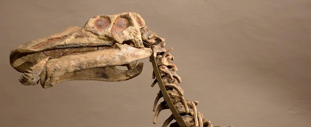 Trovato un nido di dinosauri nel deserto di Gobi: dormivano come gli uccelli