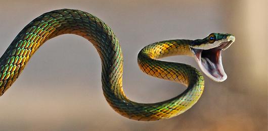 Il serpente più antico del mondo