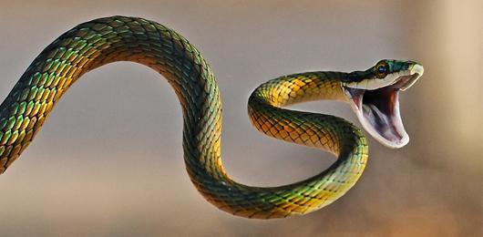 Il serpente pi antico del mondo scienze atlante - Serpente collegare i punti ...