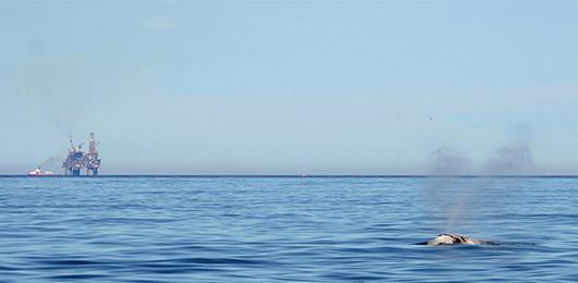 L'inquinamento acustico degli oceani