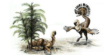 I dinosauri facevano la ruota. Come i pavoni