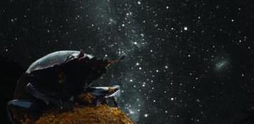 Il primo insetto astronomo
