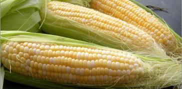 OGM tra veleni e manipolazioni