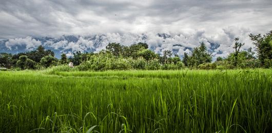 Proteggere il cibo dal cambiamento climatico