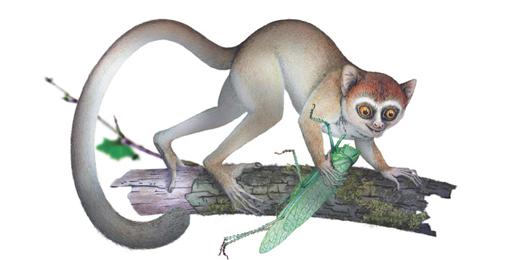 Un fossile riscrive la storia dei primati
