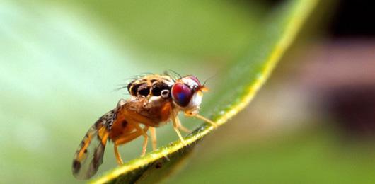 Dagli spray antizanzare ai pesticidi GM