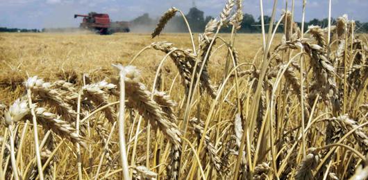Il dibattito immobile sugli OGM