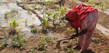 Land grabbing e alimentazione