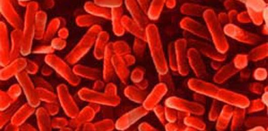 Verso il microbioma