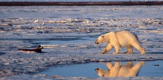 Polo Nord: fusione del ghiaccio a livelli record