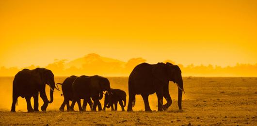 Salvate gli elefanti del Mozambico