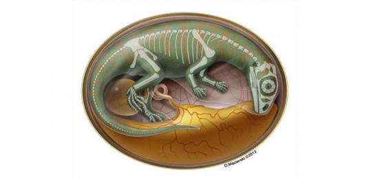 Un embrione di dinosauro