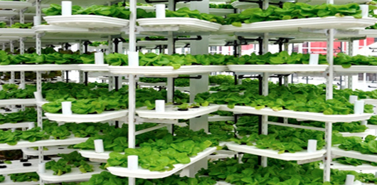 La rivoluzione verde è verticale