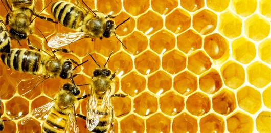 Salvate le api dall'alluminio
