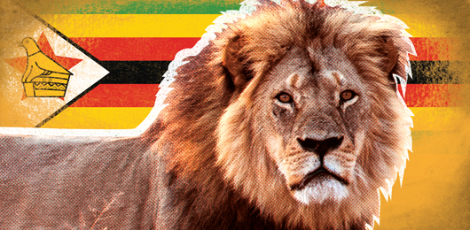 Identificato l'assassino del leone Cecil
