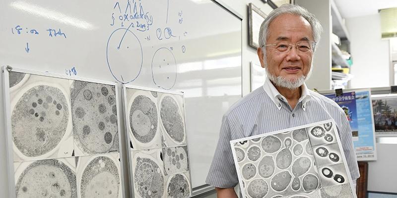 """Premio Nobel  per la medicina alle scoperte sulla """"pulizia cellulare"""""""
