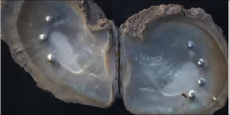 Pazzi per le perle: i musei del gioiello marino