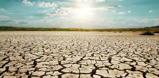 La siccità minaccia le foreste degli Stati Uniti