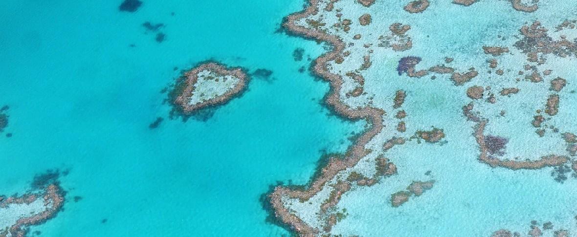 Coralli più bianchi per le alte temperature