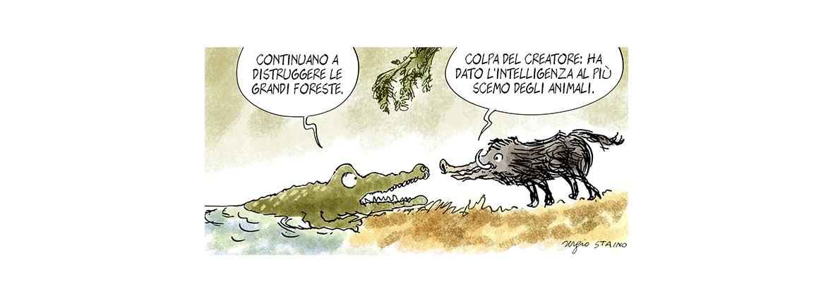 Lo stato delle foreste
