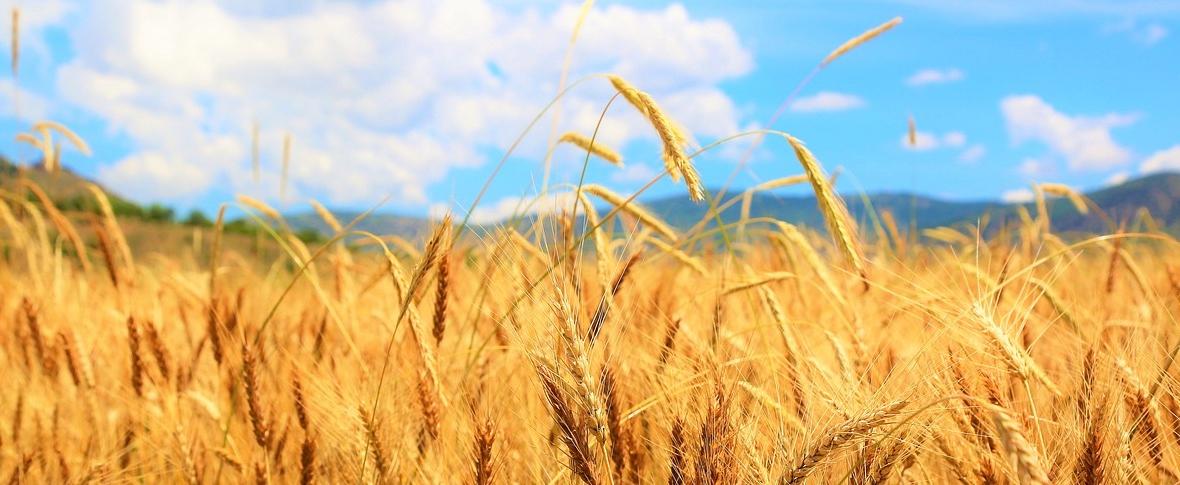 La proteina della siccità
