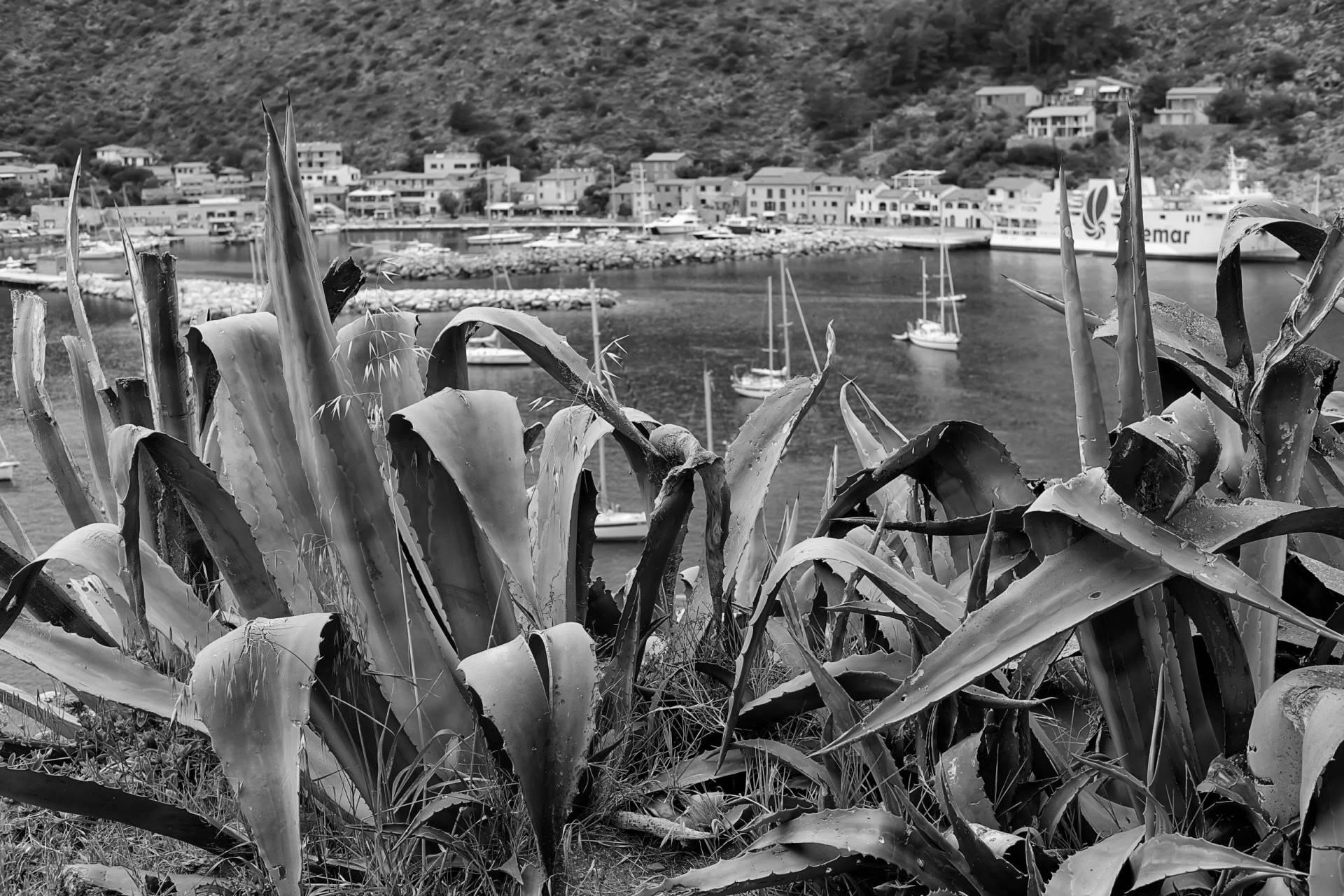 Marina di Capraia Isola