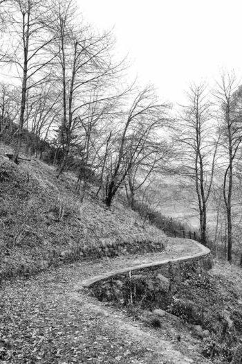 Sentiero che porta al bosco del Tumac